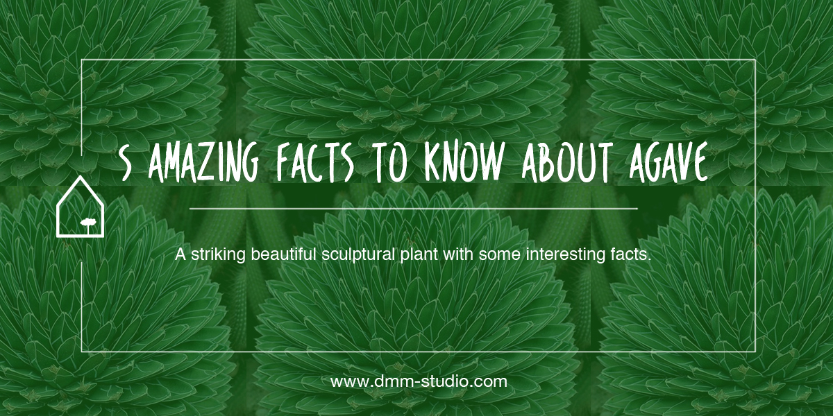 5 Amazing Facts To Know About Agaves
