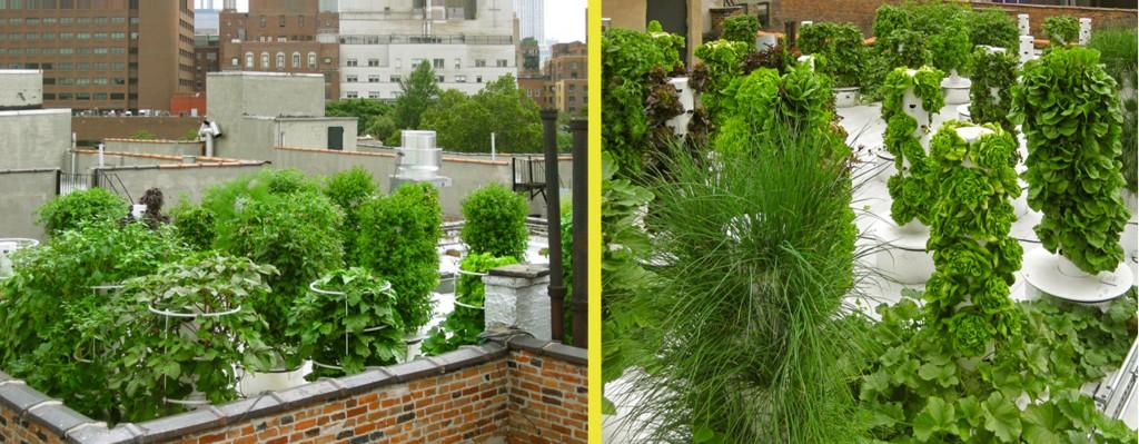 Aeroponic rooftop garden