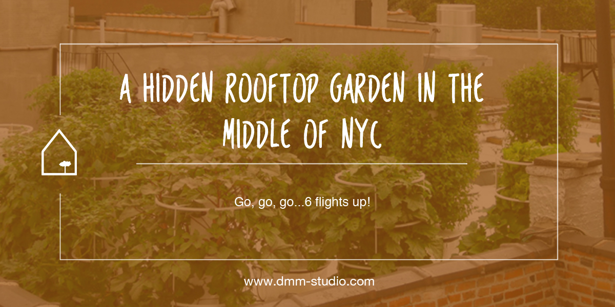 A Hidden Rooftop Garden in The Middle of NYC