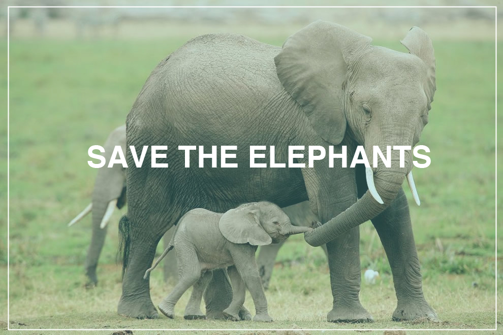 Saving The Elephants | A Cause Close to My Heart